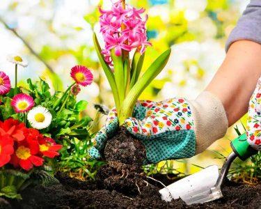 Garden This Spring