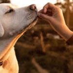 Help Your Dog Avoid These Common Health Issues