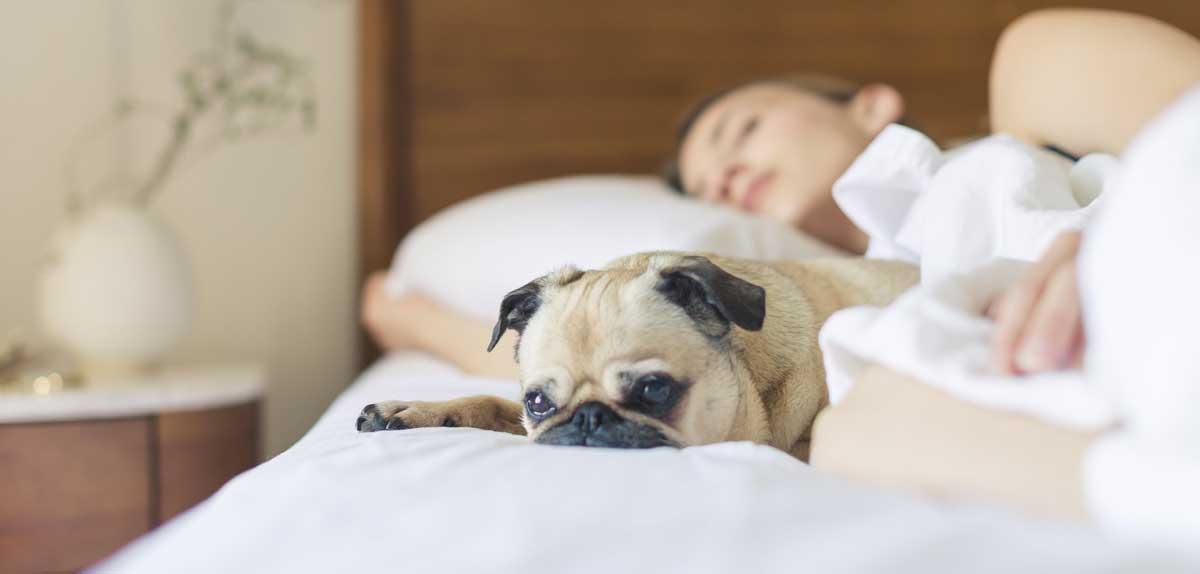 Pet with Sleep Better