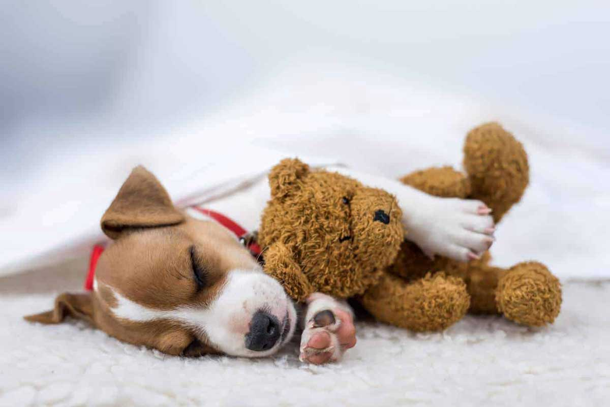 Your Pet with Better Sleep