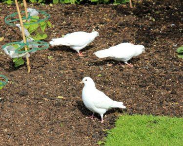Keep Birds Away From Your Garden